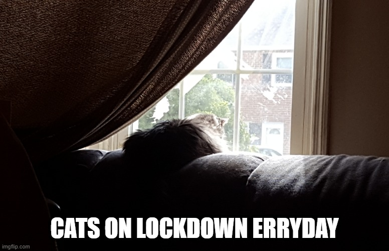 Cats on Lockdown |  CATS ON LOCKDOWN ERRYDAY | image tagged in lolcats,fun,coronavirus,quarantine | made w/ Imgflip meme maker