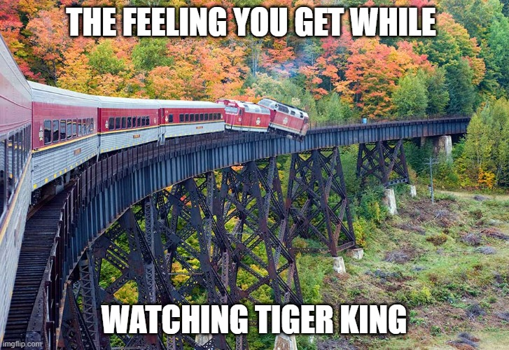 tiger king |  THE FEELING YOU GET WHILE; WATCHING TIGER KING | image tagged in tiger,king,trainwreck,hillybilly,carol,baskins | made w/ Imgflip meme maker