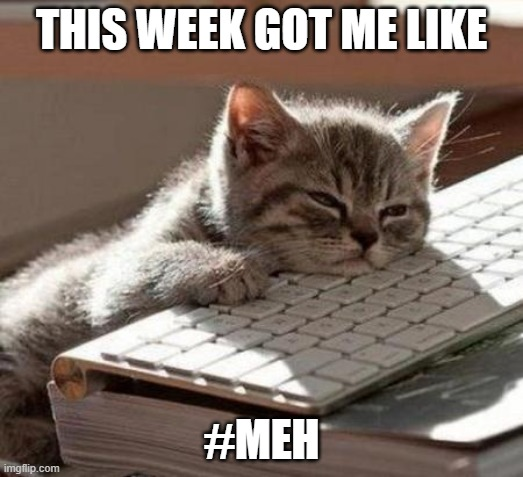tired cat |  THIS WEEK GOT ME LIKE; #MEH | image tagged in tired cat | made w/ Imgflip meme maker