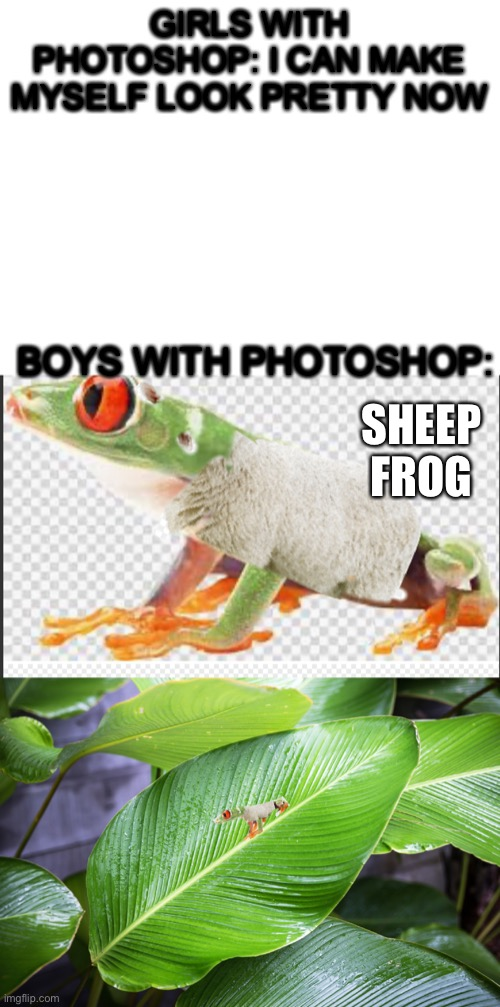 GIRLS WITH PHOTOSHOP: I CAN MAKE MYSELF LOOK PRETTY NOW; BOYS WITH PHOTOSHOP:; SHEEP FROG | image tagged in blank white template,sheep,frog,photoshop,boys vs girls,memes | made w/ Imgflip meme maker