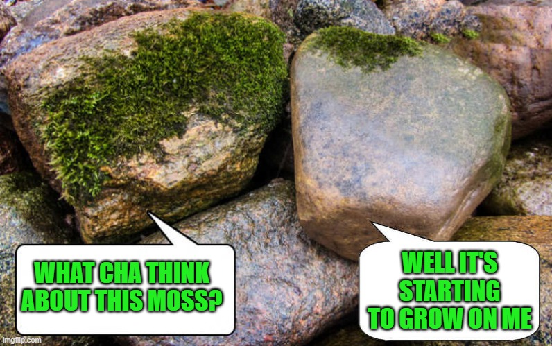 Rock talk |  WELL IT'S STARTING TO GROW ON ME; WHAT CHA THINK ABOUT THIS MOSS? | image tagged in rocks,moss,joke | made w/ Imgflip meme maker