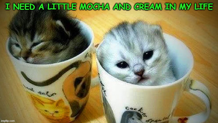 I NEED A LITTLE MOCHA AND CREAM IN MY LIFE | image tagged in cats,kittens,cute kittens,mocha and cream | made w/ Imgflip meme maker