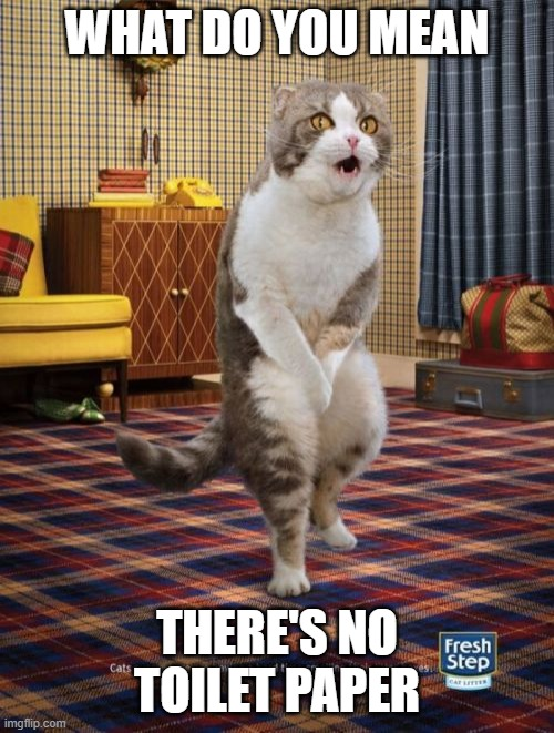 Gotta Go Cat |  WHAT DO YOU MEAN; THERE'S NO TOILET PAPER | image tagged in memes,gotta go cat | made w/ Imgflip meme maker