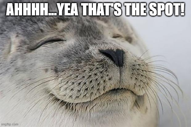 That's The Spot |  AHHHH...YEA THAT'S THE SPOT! | image tagged in memes,satisfied seal | made w/ Imgflip meme maker