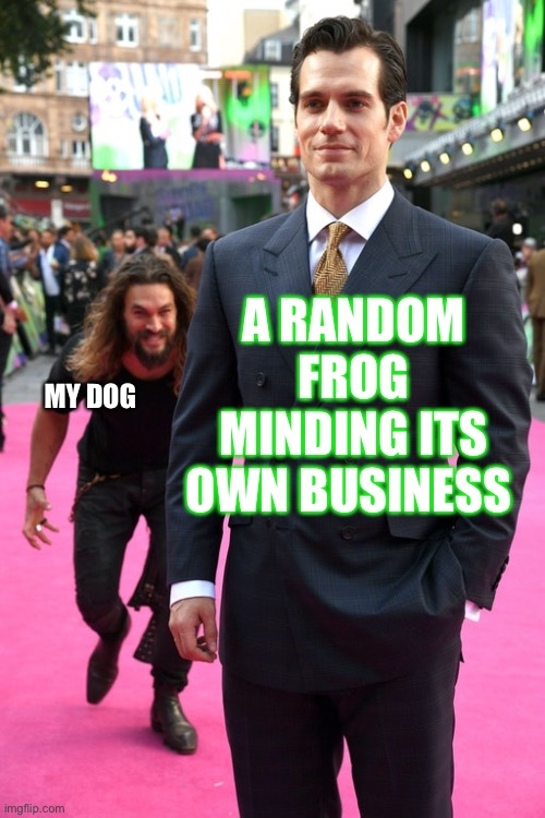 Jason Momoa Henry Cavill Meme |  A RANDOM FROG MINDING ITS OWN BUSINESS; MY DOG | image tagged in jason momoa henry cavill meme | made w/ Imgflip meme maker