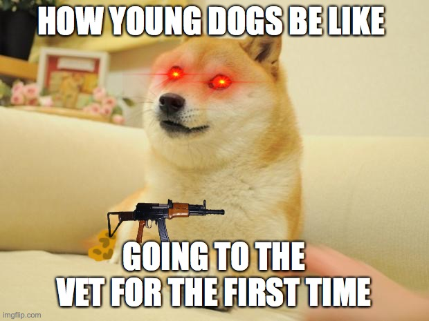 young dogs goin to the vet for the first time be like |  HOW YOUNG DOGS BE LIKE; GOING TO THE VET FOR THE FIRST TIME | image tagged in no no no | made w/ Imgflip meme maker