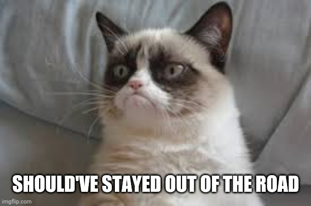Grumpy cat | SHOULD'VE STAYED OUT OF THE ROAD | image tagged in grumpy cat | made w/ Imgflip meme maker