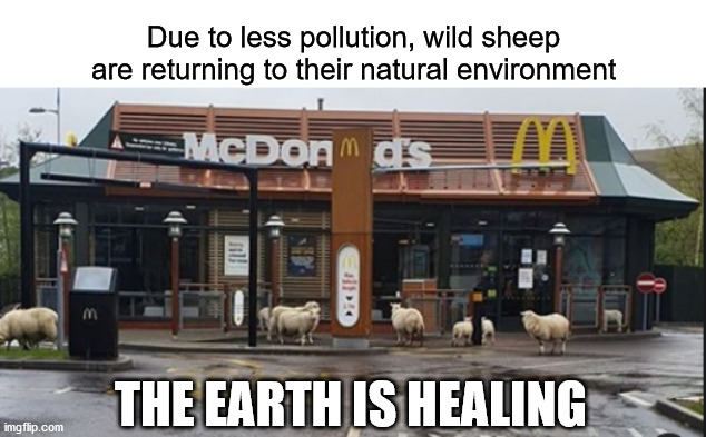 baddup bop bop ba ba |  Due to less pollution, wild sheep are returning to their natural environment; THE EARTH IS HEALING | image tagged in mcdonalds,pollution,earth healing,corona,environment | made w/ Imgflip meme maker