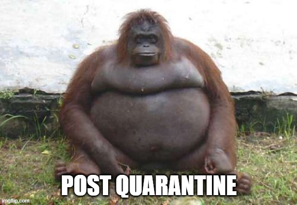 POST QUARANTINE | image tagged in coronavirus,funny animals,quarantine | made w/ Imgflip meme maker