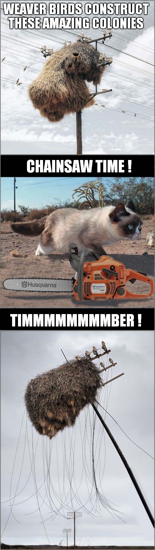 Grumpy Vs Weaver Birds |  WEAVER BIRDS CONSTRUCT THESE AMAZING COLONIES; CHAINSAW TIME ! TIMMMMMMMMBER ! | image tagged in fun,grumpy cat,birds,chainsaw | made w/ Imgflip meme maker