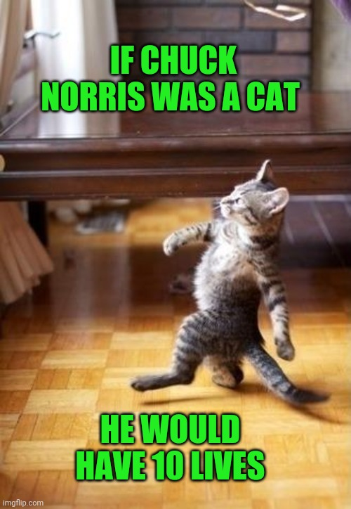 If Chuck Norris Was A Cat |  IF CHUCK NORRIS WAS A CAT; HE WOULD HAVE 10 LIVES | image tagged in memes,cool cat stroll,chuck norris,cat,funny,humor | made w/ Imgflip meme maker
