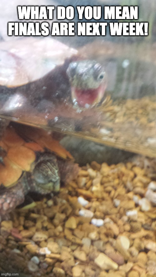 Finals week got me like |  WHAT DO YOU MEAN FINALS ARE NEXT WEEK! | image tagged in wide eyed turtle,finals week,college | made w/ Imgflip meme maker