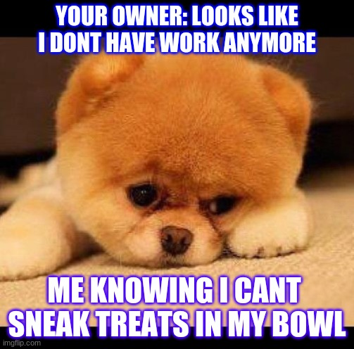 sad dog |  YOUR OWNER: LOOKS LIKE I DONT HAVE WORK ANYMORE; ME KNOWING I CANT  SNEAK TREATS IN MY BOWL | image tagged in sad dog | made w/ Imgflip meme maker