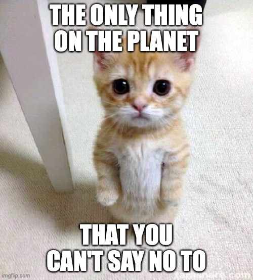 0w0 |  THE ONLY THING ON THE PLANET; THAT YOU CAN'T SAY NO TO | image tagged in memes,cute cat | made w/ Imgflip meme maker