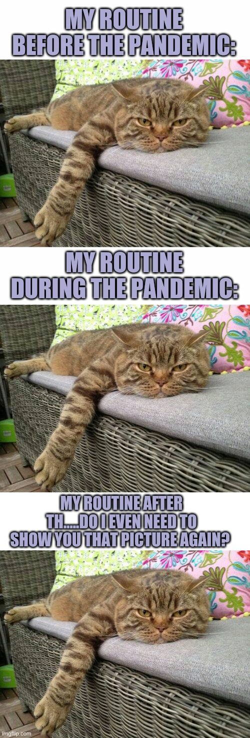 Cat routine |  MY ROUTINE BEFORE THE PANDEMIC:; MY ROUTINE DURING THE PANDEMIC:; MY ROUTINE AFTER TH.....DO I EVEN NEED TO SHOW YOU THAT PICTURE AGAIN? | image tagged in bored cat,pandemic,meme,funny,cats | made w/ Imgflip meme maker