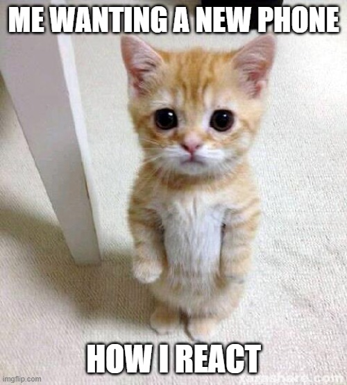 pls |  ME WANTING A NEW PHONE; HOW I REACT | image tagged in memes,cute cat | made w/ Imgflip meme maker