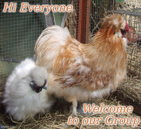 Welcome to our Group |  Hi Everyone; Welcome   to our Group | image tagged in memes,silkies,welcome | made w/ Imgflip meme maker