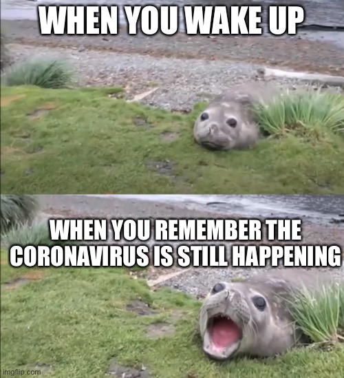 Social distancing be like |  WHEN YOU WAKE UP; WHEN YOU REMEMBER THE CORONAVIRUS IS STILL HAPPENING | image tagged in coronavirus,seal,screaming | made w/ Imgflip meme maker