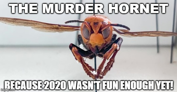 Murder Hornet |  THE MURDER HORNET; BECAUSE 2020 WASN'T FUN ENOUGH YET! | image tagged in murder hornet,2020 | made w/ Imgflip meme maker