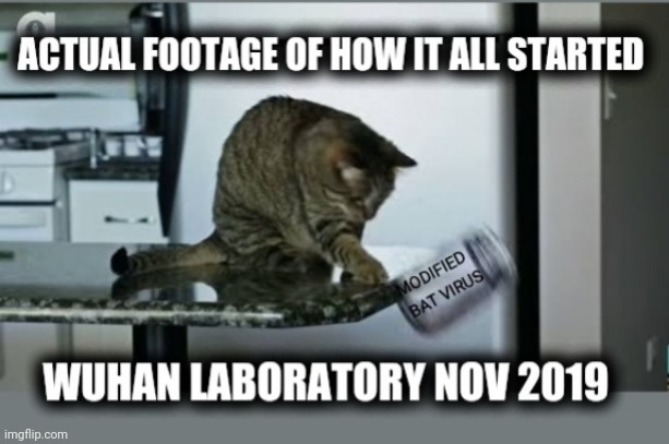 Cat in Wuhan | image tagged in wuhan,coronavirus,covid-19,covid19,virus,cat | made w/ Imgflip meme maker