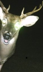 Shocked deer Meme Template
