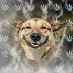 """dog"" Meme Templates - Imgflip"