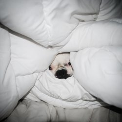 DOG HIDING UNDER THE COVERS Meme Template