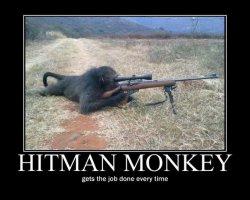 Monkey Meme Templates Imgflip