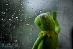 Kermit the frog rainy day Meme Template