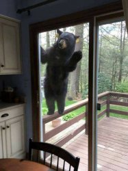 Black bear on porch railing looking in sliding glass door Meme Template
