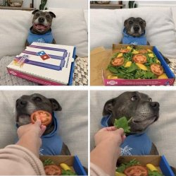 Pizza dog, not pizza Meme Template