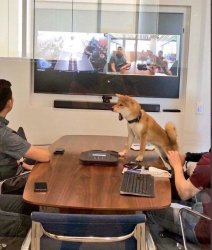 Dog in meeting Meme Template