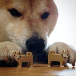 """Doge"" Meme Templates - Imgflip"