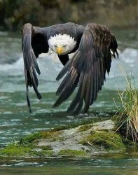 """eagle"" Meme Templates - Imgflip"