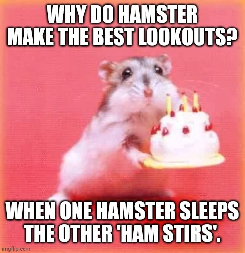 Harriet RIP (she was 2 years and days old) |  WHY DO HAMSTER MAKE THE BEST LOOKOUTS? WHEN ONE HAMSTER SLEEPS THE OTHER 'HAM STIRS'. | image tagged in birthday hamster,obituary,pun | made w/ Imgflip meme maker