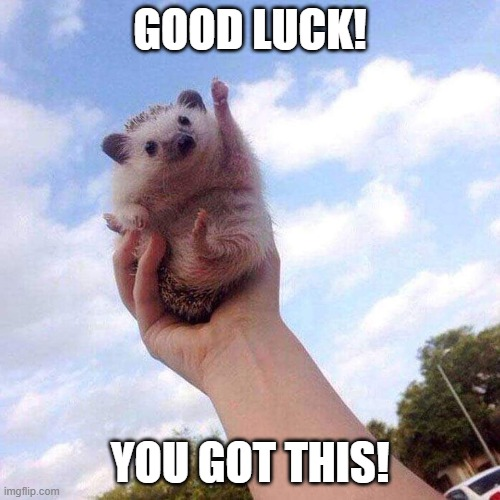 Motivational Hedgehog is Motivational |  GOOD LUCK! YOU GOT THIS! | image tagged in motivational hedgehog is motivational | made w/ Imgflip meme maker