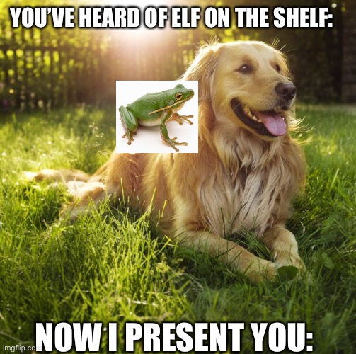 Frog on a dog |  YOU'VE HEARD OF ELF ON THE SHELF:; NOW I PRESENT YOU: | image tagged in elf on the shelf,memes,funny,dogs | made w/ Imgflip meme maker