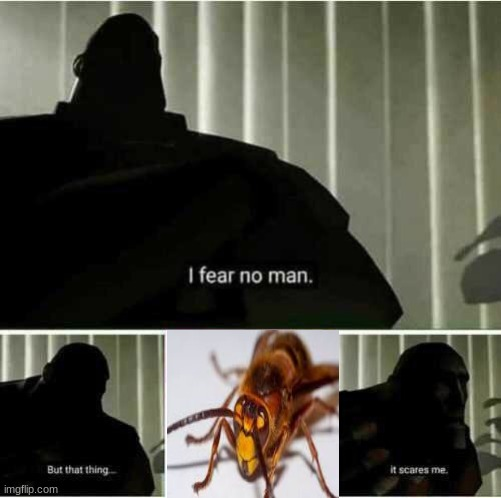 fun fact, i have a fear of wasps. i think my feelings for the murder wasps arriving in america are self-explanatory | image tagged in i fear no man,2020 | made w/ Imgflip meme maker