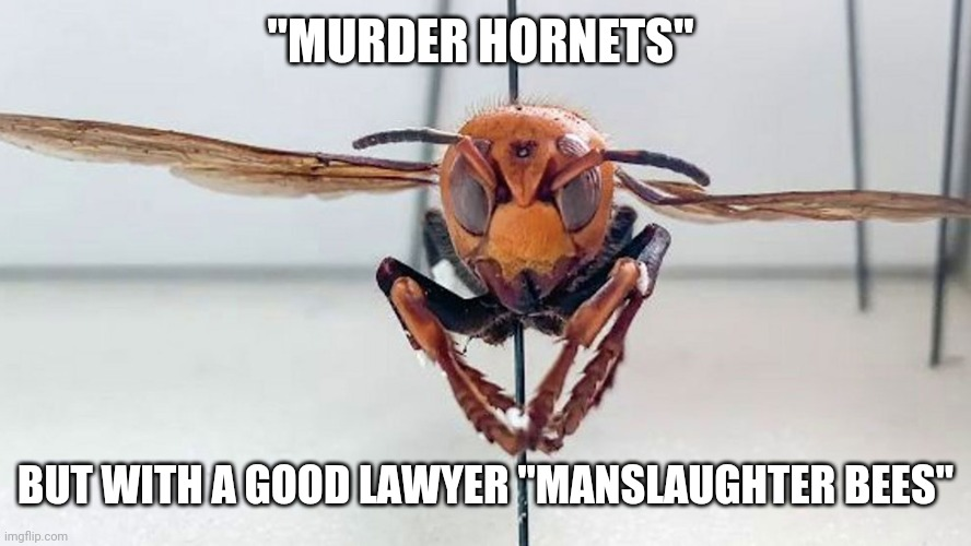 "Manslaughter Bees |  ""MURDER HORNETS""; BUT WITH A GOOD LAWYER ""MANSLAUGHTER BEES"" 