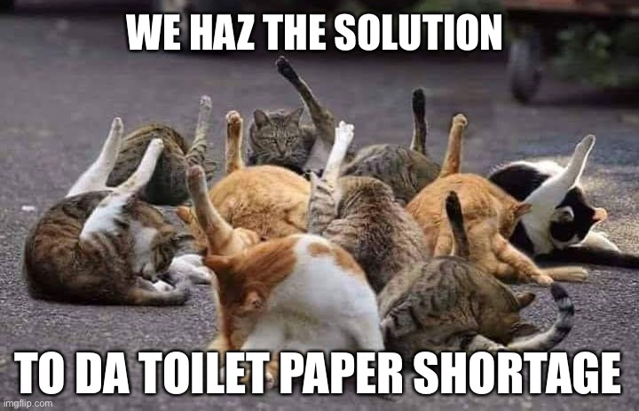 CORONAVIRUS MEMES: Toilet Paper Cats |  WE HAZ THE SOLUTION; TO DA TOILET PAPER SHORTAGE | image tagged in cats licking butts twitter compatible,toilet paper,covid-19,coronavirus,coronavirus meme,cats | made w/ Imgflip meme maker