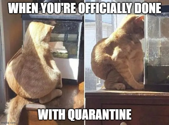WHEN YOU'RE OFFICIALLY DONE; WITH QUARANTINE | image tagged in memes,cats,covid-19,coronavirus | made w/ Imgflip meme maker