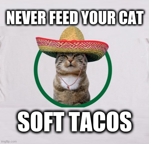 TACO MEAT |  NEVER FEED YOUR CAT; SOFT TACOS | image tagged in cinco de mayo,cats,soft tacos,tacos,taco cat,yummy | made w/ Imgflip meme maker