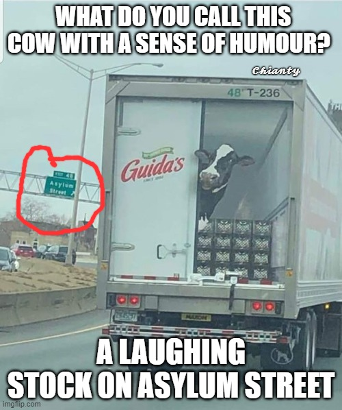 Humour? |  WHAT DO YOU CALL THIS COW WITH A SENSE OF HUMOUR? 𝓒𝓱𝓲𝓪𝓷𝓽𝔂; A LAUGHING STOCK ON ASYLUM STREET | image tagged in laughing women | made w/ Imgflip meme maker
