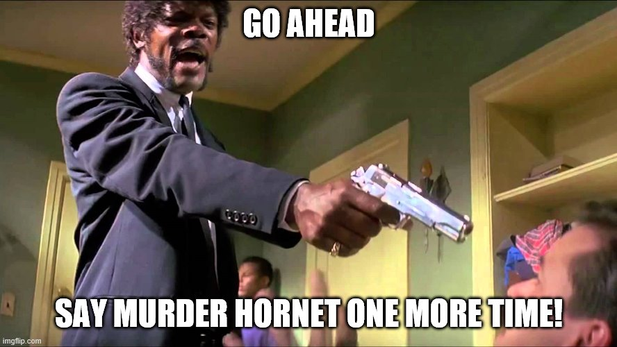 Murder Hornets |  GO AHEAD; SAY MURDER HORNET ONE MORE TIME! | image tagged in pulp fiction say what one more time | made w/ Imgflip meme maker