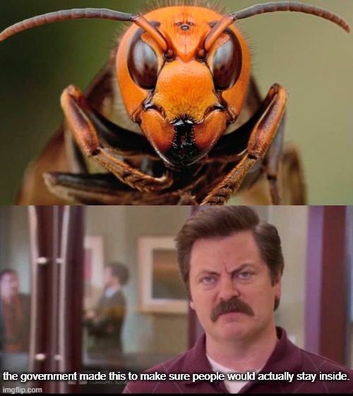 the governments maser plan |  the government made this to make sure people would actually stay inside. | image tagged in ron swanson,memes,2020,conspiracy,murder hornet,government | made w/ Imgflip meme maker