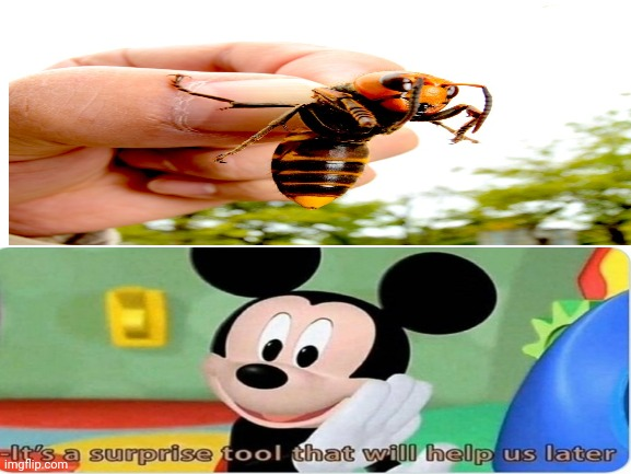 It's a suprise tool that will make a new apocalypse later | image tagged in murder hornet,mickey mouse,tool | made w/ Imgflip meme maker