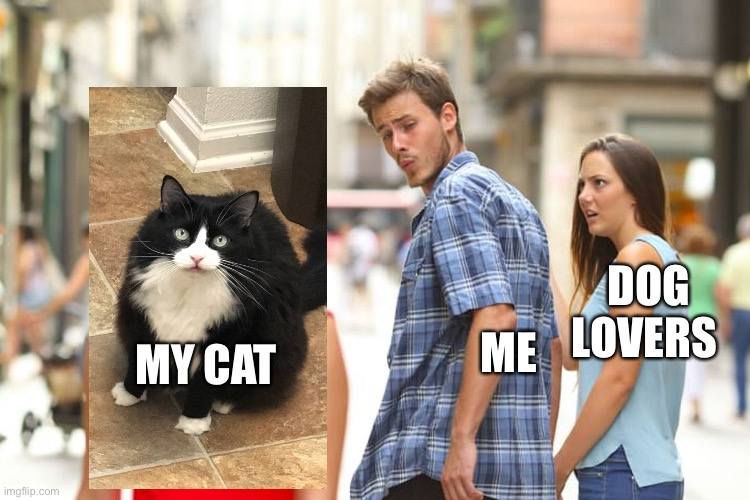 Here lays the most wonderful cat... enjoy it |  ME; DOG LOVERS; MY CAT | image tagged in memes,distracted boyfriend,cute cat | made w/ Imgflip meme maker