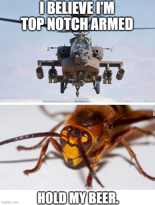 Murder hornet vs. Helicopter (military) |  I BELIEVE I'M TOP NOTCH ARMED; HOLD MY BEER. | image tagged in apache helicopter gender,memes,murder hornet,weapons,hornet,military | made w/ Imgflip meme maker