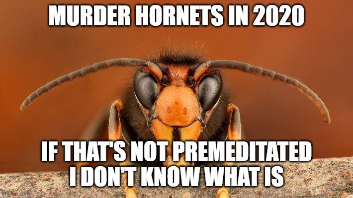Murder Hornet |  MURDER HORNETS IN 2020; IF THAT'S NOT PREMEDITATED I DON'T KNOW WHAT IS | image tagged in murder hornet,memes,funny,not funny | made w/ Imgflip meme maker