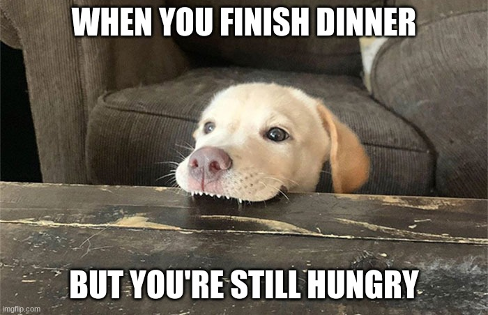 hungry dog |  WHEN YOU FINISH DINNER; BUT YOU'RE STILL HUNGRY | image tagged in dog,puppy,dinner,hungry | made w/ Imgflip meme maker